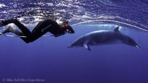ミンククジラ|ライトハウスボミー